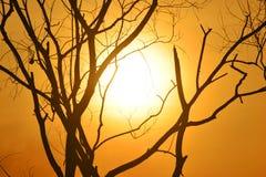 Мертвый силуэт дерева Стоковое Изображение RF