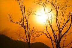 Мертвый силуэт дерева Стоковая Фотография RF