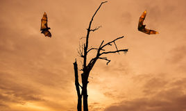Мертвый силуэт деревьев с концепцией хеллоуина лис летания Стоковая Фотография RF