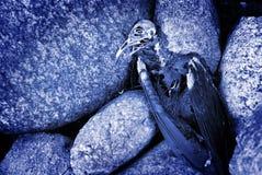 мертвый скелет смерти Стоковые Фотографии RF