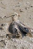мертвый скелет фламингоа Стоковое Фото