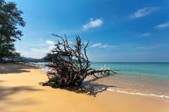 Мертвый ствол дерева на пляже Стоковое Изображение RF