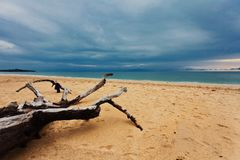 Мертвый ствол дерева на пляже Стоковые Изображения
