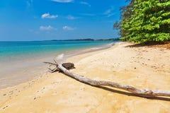 Мертвый ствол дерева на пляже Стоковые Фото