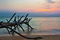 Мертвый ствол дерева на тропическом пляже Стоковая Фотография RF