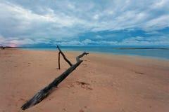 Мертвый ствол дерева на тропическом пляже Стоковые Фото