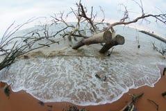 мертвый ствол дерева стоковое фото rf