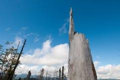 мертвый ствол дерева Стоковая Фотография