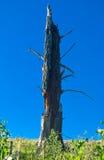 мертвый ствол дерева Стоковые Фотографии RF
