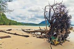 Мертвый ствол дерева на пляже Стоковое Изображение