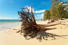 Мертвый ствол дерева на пляже Стоковые Фотографии RF