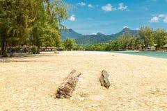 Мертвый ствол дерева на пляже Стоковая Фотография