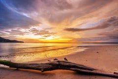 Мертвый ствол дерева на тропическом пляже Стоковые Изображения