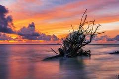 Мертвый ствол дерева на тропическом пляже Стоковое фото RF