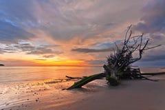 Мертвый ствол дерева на тропическом пляже Стоковые Фотографии RF