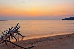 Мертвый ствол дерева на тропическом пляже Стоковые Изображения RF