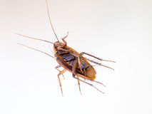 Мертвый таракан на зеркале Стоковые Изображения