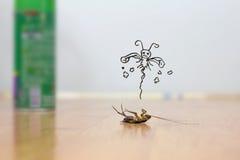 Мертвый таракан на поле, концепции службы борьбы с грызунами и паразитами Стоковые Фото
