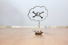 Мертвый таракан на поле, концепции службы борьбы с грызунами и паразитами Стоковая Фотография RF