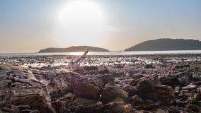 Мертвый тимберс на побережье стоковая фотография