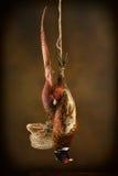 Мертвый фазан в стиле старого профессора Стоковая Фотография