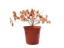 Мертвый цветок Стоковые Фото