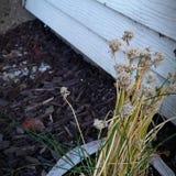 мертвый цветок Стоковые Фотографии RF
