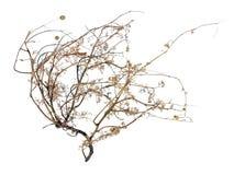 мертвый tumbleweed Стоковые Фотографии RF