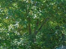 Мерцающие золотые листья под красивым темносиним небом Стоковые Изображения