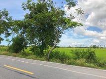 Местная конкретная дорога с деревом Стоковые Фотографии RF