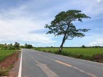 Местная конкретная дорога с деревом Стоковые Изображения RF