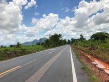 Местная конкретная дорога с деревом Стоковая Фотография RF