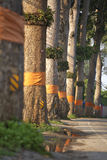 Местная дорога в Таиланде стоковые фотографии rf