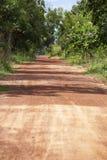 Местная дорога и много дерево стоковое фото