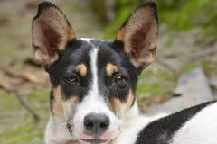 Местная собака улицы Стоковое фото RF