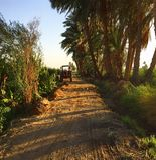 Местное сельскохозяйственное угодье в Египте Стоковое Изображение RF