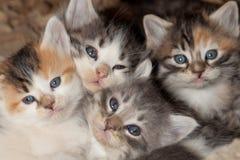 Местные помехи котенка Стоковое фото RF
