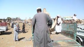 Местные продавцы верблюда на верблюде выходят верблюдов вышед на рынок на рынок загрузки к тележкам сток-видео