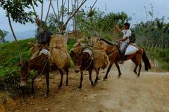 местный человек транспортируя товары поднимает гору стоковое изображение rf