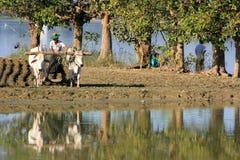 Местный человек работая на поле фермы около озера, Amarapura, Мьянмы Стоковая Фотография