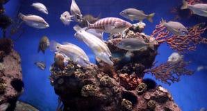 место аквариума Стоковое Изображение