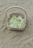 Wedding на пляже. Стоковые Изображения RF