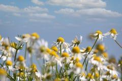 Место весны природы стоцвета Стоковая Фотография RF