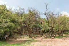 Место для лагеря в горе Koranna около эксцельсиора Стоковое фото RF
