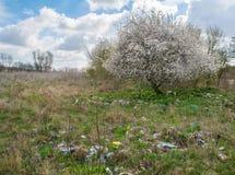 Место захоронения отходов и дерево Стоковая Фотография