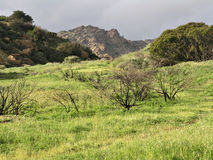 место зеленого цвета травы пастырское Стоковые Изображения