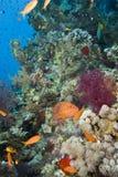 место кораллового рифа тропическое Стоковые Фотографии RF