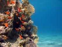место кораллового рифа Стоковое Изображение RF