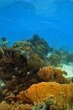 место кораллового рифа Стоковое фото RF