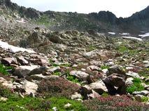место красного цвета Франции земли стоковое изображение rf